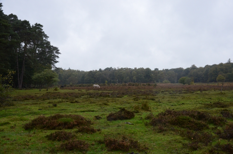 Mushroom Picking in the New Forest www.bluemesablog.com