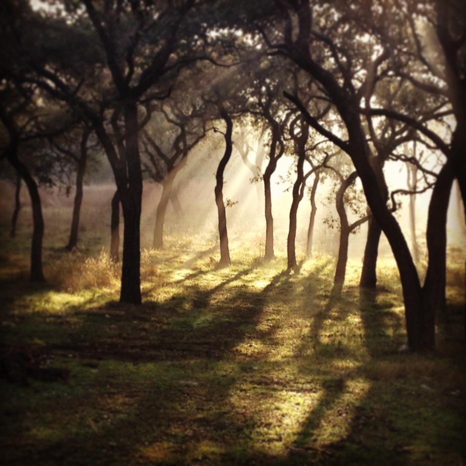 Texas Morning Light www.bluemesablog.com