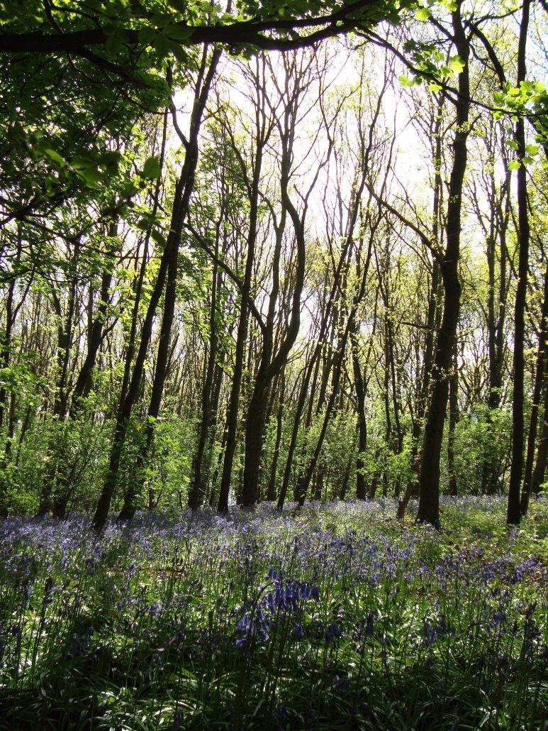 Bluebell Woods, England www.bluemesablog.com