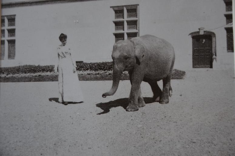 Victorian Elephant www.bluemesablog.com