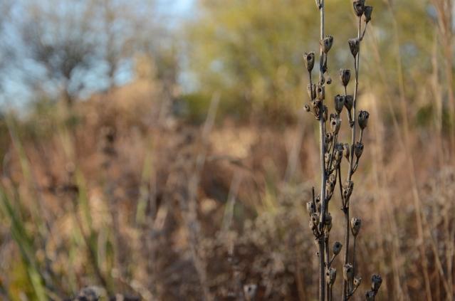 The Oxford Botanical Gardens, England www.bluemesablog.com