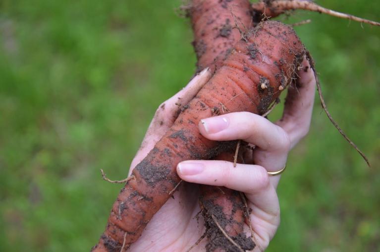 The Morning Garden, www.bluemesablog.com