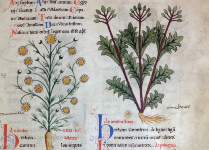 Flora and Fauna in Medieval Medical Manuscripts, Oxford www.bluemesablog.com