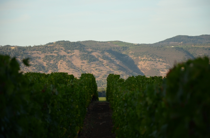Harvest, Napa Valley, California www.bluemesablog.com